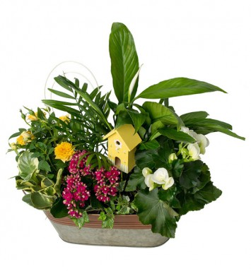 Planters and Blooming Plants
