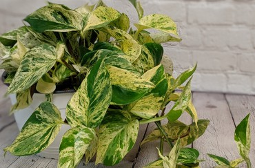 Top 5 Plants for Non-Plant People
